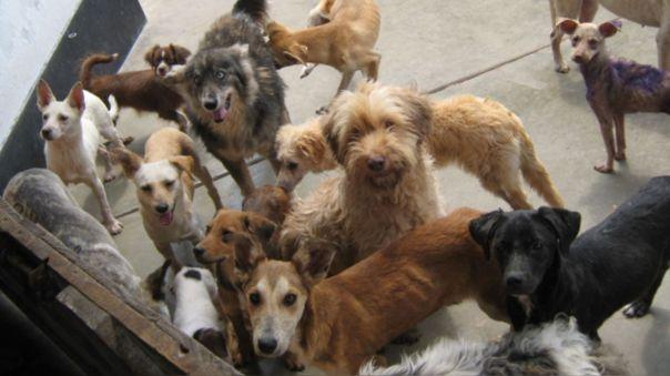 bancadas-del-congreso-presentan-proyecto-para-que-esterilizacion-de-perros-y-gatos-sea-politica-de-salud-publica