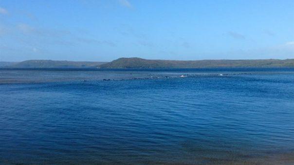 descubren-unas-70-ballenas-varadas-en-una-zona-remota-de-la-isla-de-tasmania