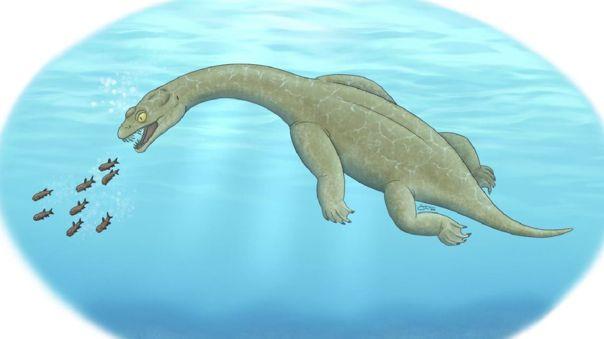 hallan-fosil-de-pequeno-reptil-de-hace-240-millones-de-anos-que-flotaba-en-el-mar-para-cazar